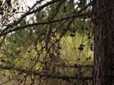 046_pereslavl_rostov_29-04-1-05-2012