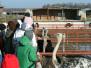 Семейный выезд на страусиную ферму.